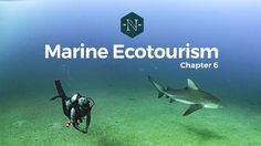 Marine Ecotourism in the Gulf of California...