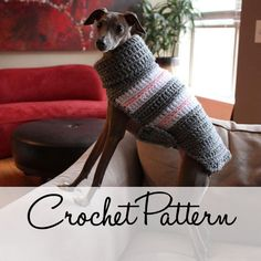 PDF Crochet Pattern for Small Breed Dog Sweater and Snood. $5.00, via Etsy.