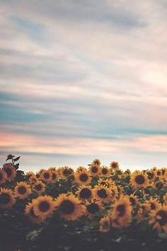 Sunflowers are my beautifulness!