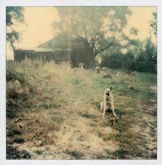 Polaroid by Andrei Tarkovsky Lot 21 - Polaroid 4