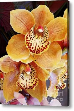 Sold - Golden Orchid