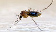 Jak pozbyć się śladów po ukąszeniach komarów? Domowe sposoby na bąble po komarach Ślady po ukąszeniach komarów mogą się utrzymywać kilka, a nawet kilkanaście dni. Aby się ich pozbyć,najlepiej kupić w aptece specjalne maści, które łagodzą podrażnienia skóry. Czerwone plamy i bąble po ugryzieniach komarów pomoże także usunąć sok z liści aloesu czy papka z …