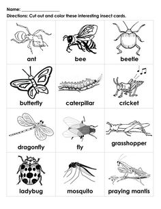 bugs for kids to color | ... Interesting Insects black-white cards student-handout | ESL For Kids
