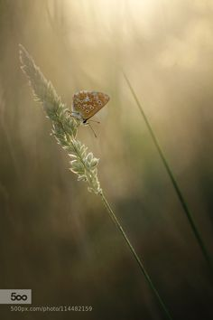 Hiding by donlope. Please Like http://fb.me/go4photos and Follow @go4fotos Thank You. :-)