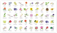 50 State Flowers with Meanings