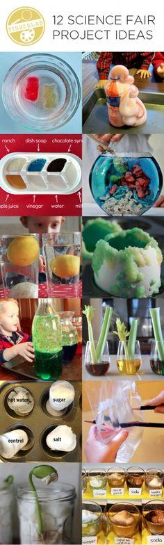 12 Science Fair Project Ideas | TinkerLab