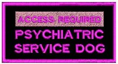 7 accessories every dog-owner must have Service Dog Training, Service Dogs, Dog Training Tips, Black Rectangle, Rectangle Shape, Service Dog Patches, Psychiatric Service Dog, Medication For Dogs, Dogs