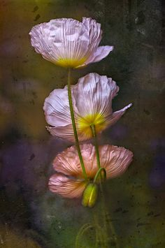 ~~Poppies on Parade by Dianne English~~