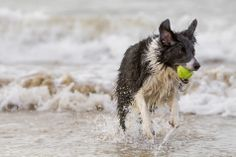 North Wales Dog Photography