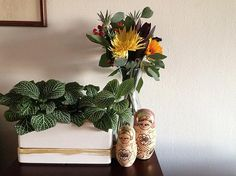 Urban Jungle Bloggers: Plants & Flowers by @dutchified