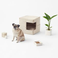 Japanese studio Nendo has launched a collection of accessories for dogs that are designed to look good inside minimally furnished homes