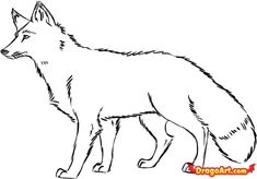 fox.drawing | how to draw a red fox step 7