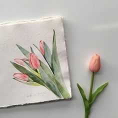 1,116 vind-ik-leuks, 61 reacties - 누누작업실 (@nunu_artroom) op Instagram: ' #튤립 #tulip #꽃그림 . . paper : khadi paper 20*20 150gsm brush : babara 70r 0, 6 paint :…'