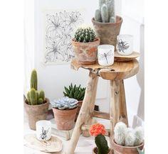 Além de ser fácil cuidar dessas plantas, elas combinam com vários estilos de ambientes