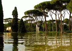 Canopy trees and water features of the Vatican City gardens. Music Flower, Tree Canopy, Flower Pots, Flowers, Vatican City, Water Features, Outdoor Gardens, City Gardens, Places To Visit
