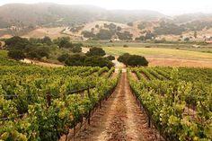 wine vineyards - Google Search
