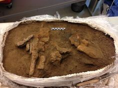 1,000-Year-Old Viking Toolbox Found at Mysterious Danish Fortress The remains of the toolbox were found in what archaeologists think was a workshop in the Viking fortress at Borgring.