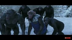 Bad Ape,  Rocket and others escaping in War for the Planet of the Apes  ❤❤❤  #rocket #badape #warfortheplanetoftheapes #apestogetherstrong