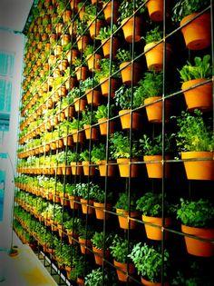 Southern Health Healing Garden: Green Wall Design Ideas