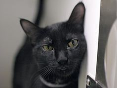 TO BE DESTROYED - 05/07/15 - DELILAH - #A1034019