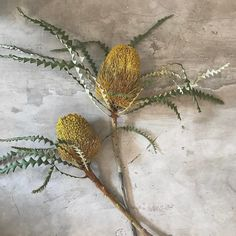 """Mimsy Botanical Flower (@mimsybotanical) on Instagram: """"Don't you love her? Banksia • Available in our flower shop #mimsybotanical #flowershopjakarta…"""""""