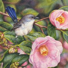 'Blue Wren and Camellias' continues on with my highly popular miniatures series of sentimental garden favourites, small birds and exquisite small works