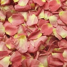 FiftyFlowers.com - Alluring Peachy Dried Pink Rose Petals