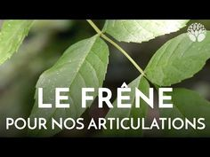 Permaculture, Vegetable Garden, Plant Leaves, Health Fitness, Medical, Youtube, Plants, Marc Andre, Cook