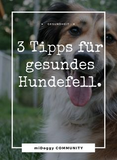 Hier gibt es dazu mehr. || Hund || Tipps || Ideen ||