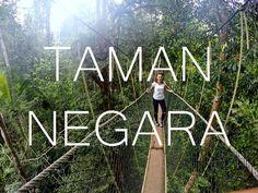 TAMAN NEGARA - Der älteste Regenwald der Erde! Tipps, Unternehmungen und viele Eindrücke hiiiiier!