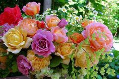 Lovely, assorted roses