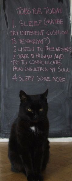 My cat is sad because Friday is an easy day for many people and cats, but for him it is full of tiresome chores.