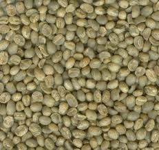 Green Coffee Extract – Seen on Doctor Oz gotta try it~