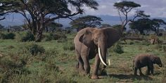 A hunting club is auctioning off hunting permits to kill 600 animals, including African elephants. Sign to stop it! (11233 signatures on petition)