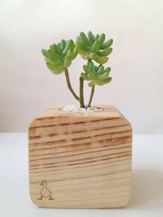 Wood & Succulenta by Goosucc #goosucc #goosucculents #wood #couple #succulents #plants #gifts #madeinukraine #kyiv #homedecor #sedum https://www.facebook.com/goosucc