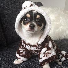 BABY MINNIE  BATHED AND READY FOR BED  #chihuahua #chihuahuas #chihuahuasofinstagram #chihuahuadog #beautiful #puppy #puppys #puppydog #puppyeyes #cutepuppy #sleepypuppy #cute #dog #dogofthedayjp #dogsofinstagram #bestdog #bestdogever #mydogiscutest #excellent_dogs #love #disney #Minnie #bestfriend  by lisamcpartland7