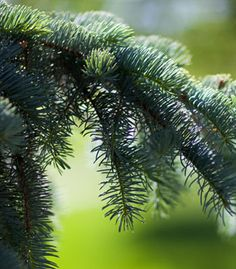 The benefits of planting trees and shrubs in your yard Trees And Shrubs, Trees To Plant, Benefits Of Planting Trees, Yard, Gardening, Plants, Patio, Tree Planting, Lawn And Garden