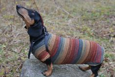Hallo en welkom  Als u graag deze trui, maar je hond heeft een ander formaat of een andere kleur wilt gebruiken, laat het me weten, ik zal het maken van een trui van uw grootte en kleur.  De oorspronkelijke trui met strepen Goed loopt op kleding en ziet er geweldig uit! Drie knoppen onder de hals.  Ideaal voor teckel, alsmede voor middelgrote honden  Materiaal: 49% wol 51% katoen  100% hand gebreid   Gelieve uw hond meten   X-Small  1. lengte 11-12 inch (28-30,5 cm) 2. nek 8-10 inch (20-25,5…