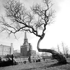 47 отметок «Нравится», 7 комментариев — Головин Михаил (@golovinfoto) в Instagram: «#pentax #k5 #16-50 #tree #redsquare #moscow #city #москва #дерево #чб #bw #кремль #краснаяплощадь»