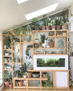 Precious Tips for Outdoor Gardens In general, almost half of the houses in the world… Big Indoor Plants, Indoor Plant Wall, Room With Plants, House Plants, Decoration Plante, Budget Home Decorating, Living Room Goals, Plant Shelves, Planted Aquarium