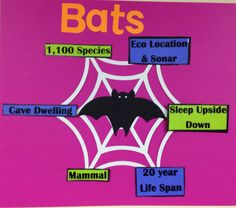 Teach about animals with an information web