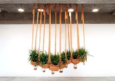 Flying fern, cater-boa-pillar, cleaning air, cleaning earth by Ernesto Neto