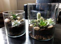 Open terrariums are ideal for cacti and other succulents. They'll thrive on a bright window sill and require minimal care. Closed Terrarium Plants, Terrarium Diy, Glass Terrarium, Terrariums, Nerve Plant, Window Sill, Cacti And Succulents, Plant Decor, Lab