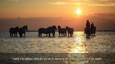 L'amitié et la confiance valent plus que tout, du moment qu'elle viennent du cheval et de son cavalier.