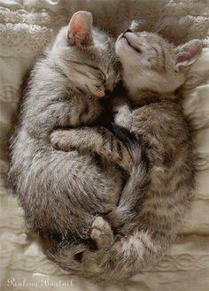 "I ""LOOOVE"" KITTY LOVE! <3"