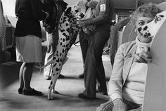 true masters of moments: Ken Graves and Eva Lipman Street Photographers, American, Les Oeuvres, Giraffe, Photography, Giraffes