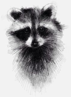 Raccoon, One of my sketch a day drawings  #raccoon #sketch #drawing prints available for sale on Etsy https://www.etsy.com/uk/shop/SketchyLife