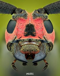 Cool Insects, Bugs And Insects, Macros, Scary Bugs, Spider Face, Micro Photography, Beautiful Bugs, Insect Art, Weird Creatures