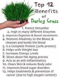 12 Benefits of Barley Grass - gerstengras bij de tuinen - mixen met gember en het om het zoet te maken of met juice maken.