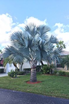Waterfall Landscaping, Palm Trees Landscaping, Backyard Landscaping, Big Plants, Nature Plants, Tropical Plants, Palm Plant, Trees To Plant, Palm Trees Garden